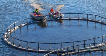 agricultura-convoca-subvenciones-desarrollar-nuevos-mercados-la-pesca-acuicultura-2019