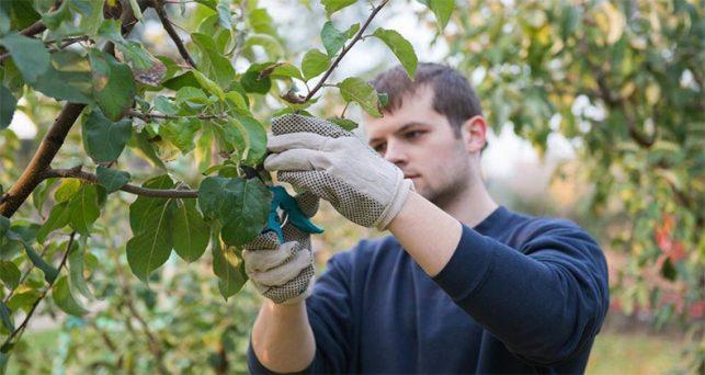 bruselas-bei-destinan-1000-millones-prestamos-jovenes-agricultores