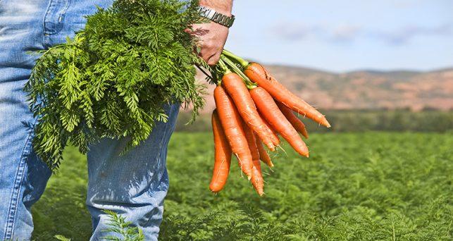 bruselas-eleva-25000-euros-ayudas-se-pueden-conceder-agricultores-sin-notificar-ue