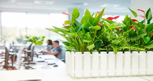 flores-potencian-productividad-trabajadores