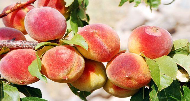 gobierno-aprueba-la-nueva-norma-nacional-las-ayudas-la-ue-sector-frutas-hortalizas