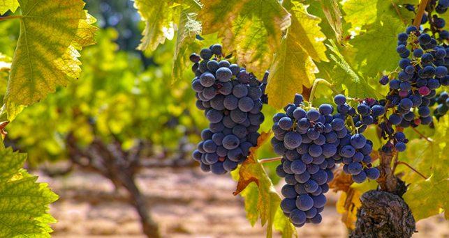 Resultat d'imatges de sector vitivinícola